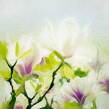 magnolia van Andreas Wemmje