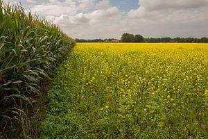 Geel bloeiend koolzaad in Winterswijk  van Tonko Oosterink