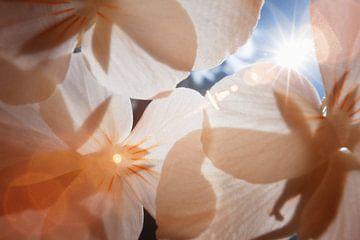 Makro-Infrarot-Linsenblendung für Blumen von Lars Beekman