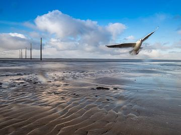 Wattenmeer an der Nordsee mit Möwe von Animaflora PicsStock