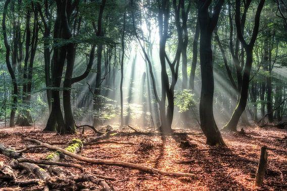 Holländischer Wald