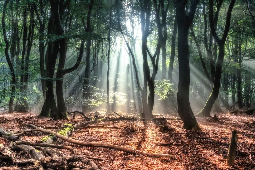 Dutch forest van Niels Barto