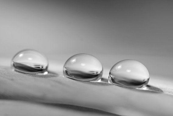 Rainy days von Carla Mesken-Dijkhoff