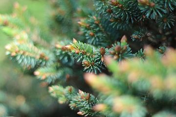 Pine cones van The Pixel Corner
