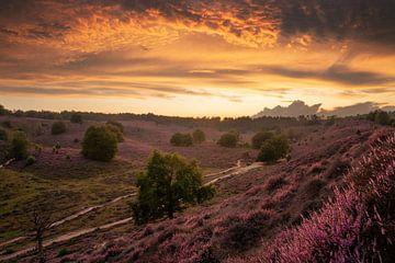Prachtige zonsondergang bij de Posbank, Nederland, bloeiende heide, bloeiende hei van Martin Podt