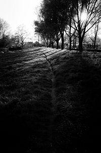 Shadow Play van Nick Hoekstra
