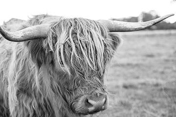Schottische Highlander schwarz-weiß. von Ruth Kamstra