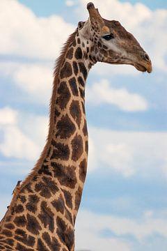 Een giraffenek met een vogeltje in de blauwe lucht. van Gunter Nuyts
