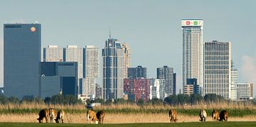 The other Rotterdam skyline
