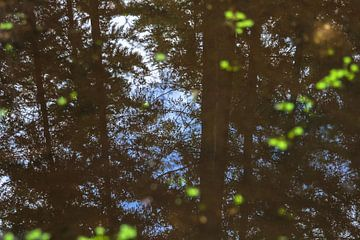 Bos in het water van Petra Brouwer