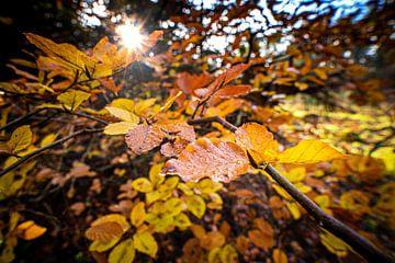 Kleurrijke herfstbladeren in het zonlicht van Fotografiecor .nl