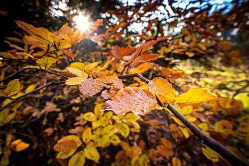Kleurrijke herfstbladeren in het zonlicht