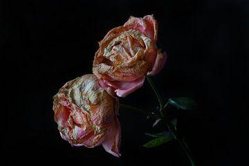 zwei Verblüte Rosen von Dieter Beselt