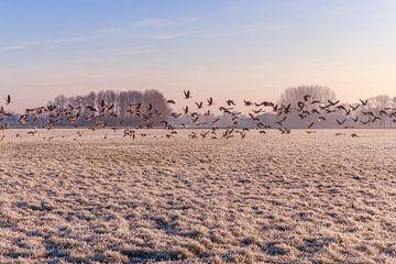 Vogels op het land van