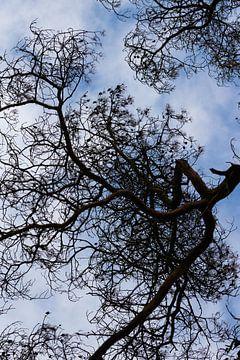 Kijk omhoog, dan zie je kunst in de natuur van Clazien Boot