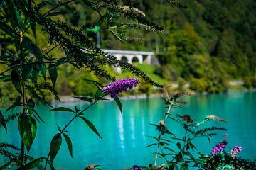 Vlinderstruik Brienzersee Zwitserland von Gideon Onwezen