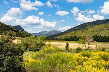 Typische Landschaft mit Bergen und Blumen in Südfrankreich von Martijn Joosse