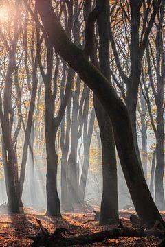 Sonneneinstrahlung in den Speulderbos von Midi010 Fotografie