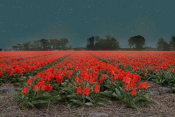 Rote Tulpen in der Nacht von Elianne van Turennout
