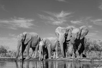 Drinkende olifanten van Robert Peeters