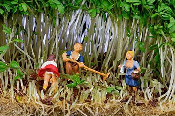 Oogst van tuinkers van Arie Kraaijeveld