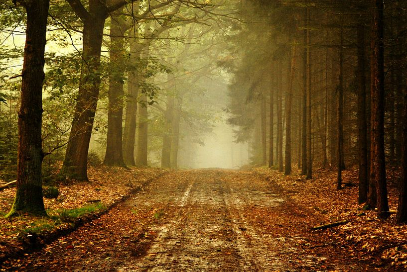 Misty  path van Frank Tauran
