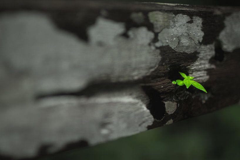 leaf van Jelle  Beuzekom