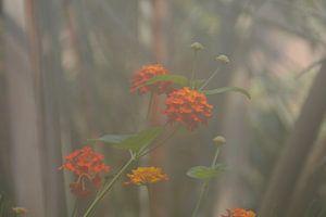 oranje bloen in een nevelige omgeving