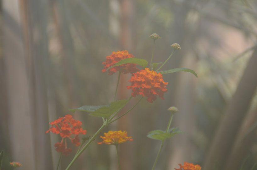 oranje bloen in een nevelige omgeving von Pascal Engelbarts