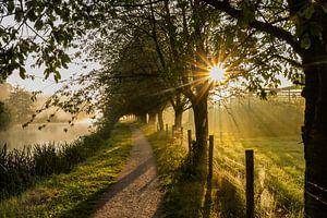 Belle atmosphère par un matin brumeux le long du Kromme Rijn