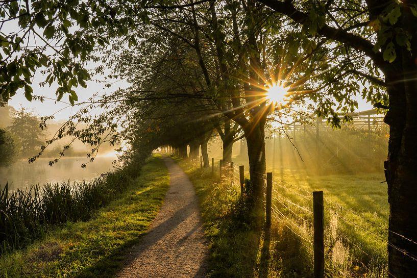 Belle atmosphère par un matin brumeux le long du Kromme Rijn sur Arthur Puls Photography