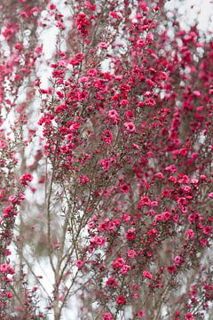 Rosa Blüte auf einer weißen Wand von Tot Kijk Fotografie: natuur aan de muur