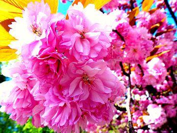 Bloesem in roze van Angelique Roelofs