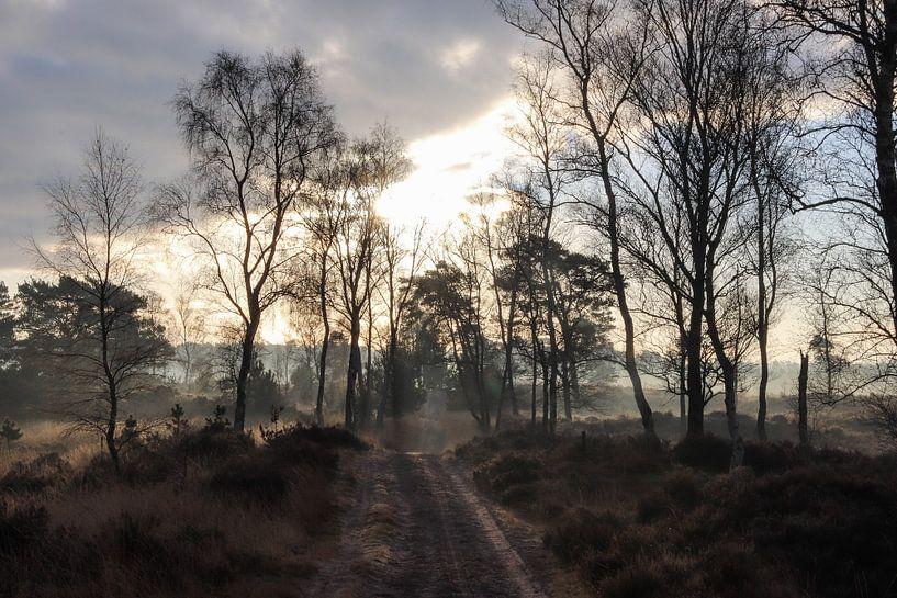 Nebliger Morgen von Anya Lobers