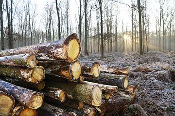 Winter in het bos van Egon Zitter
