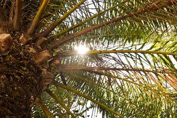 Palmboom en zon in Spanje