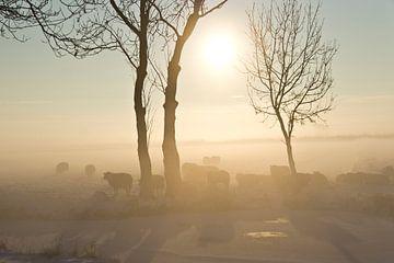 Schapen in de ochtendmist von Fotografia PB