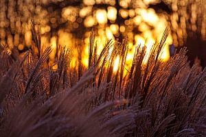 Winterse zonsopkomst in Nederland van