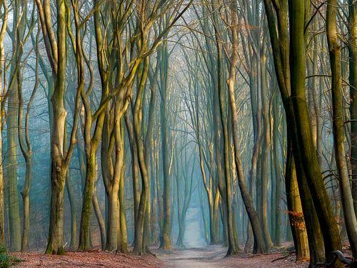 Light & Trees van Lars van de Goor