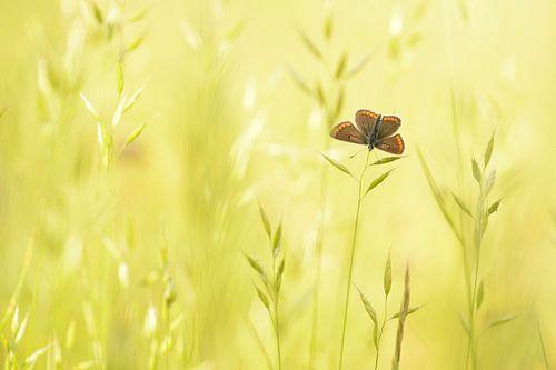 Bruin blauwtje von Elles Rijsdijk