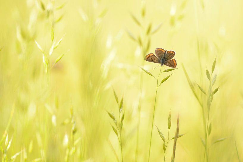 Bruin blauwtje van Elles Rijsdijk