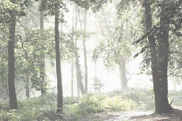 In het bos von Ron de Vries