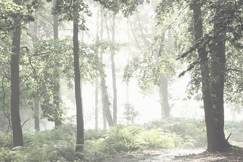 In het bos van