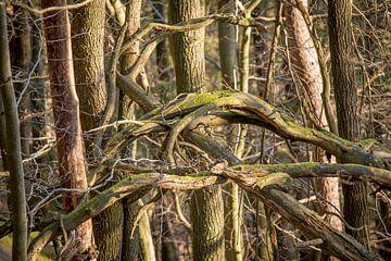 Dode bomen en takken van Hans-Jürgen Janda