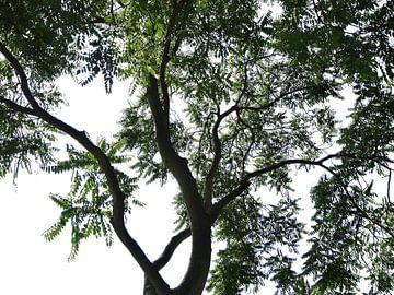 Tree Magic 35 van MoArt (Maurice Heuts)