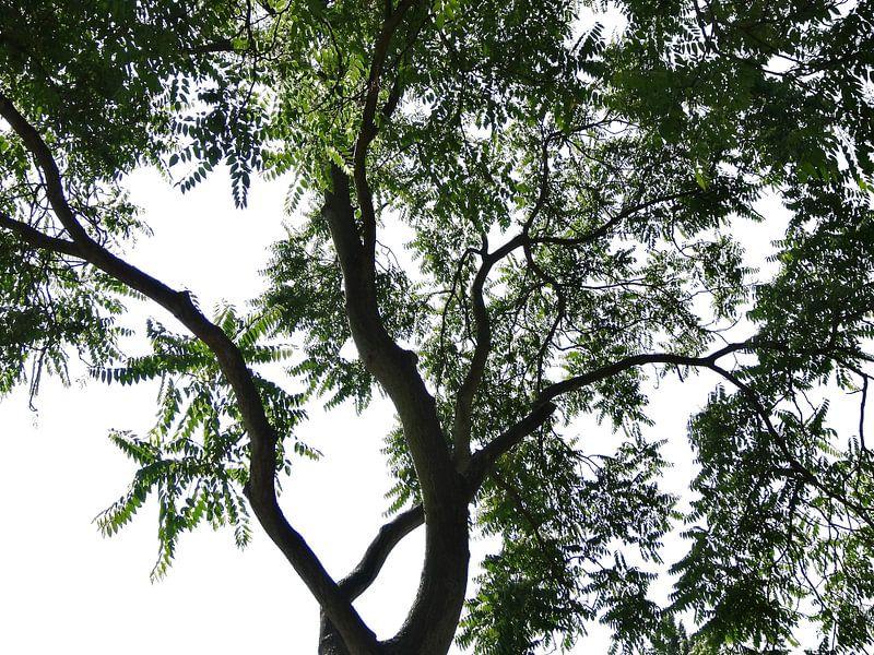 Tree Magic 35