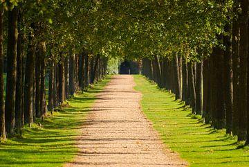 Die Bäume entlang der langen Allee von Michel Geluk