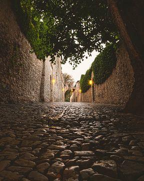 Chemin pavé avec arbre