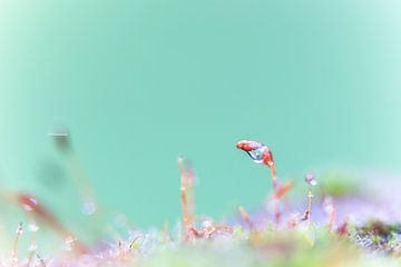 Een macrofoto van mos met waterdruppels. van Robert Wiggers