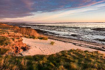 Küste am Wattenmeer auf der Insel Amrum von Rico Ködder